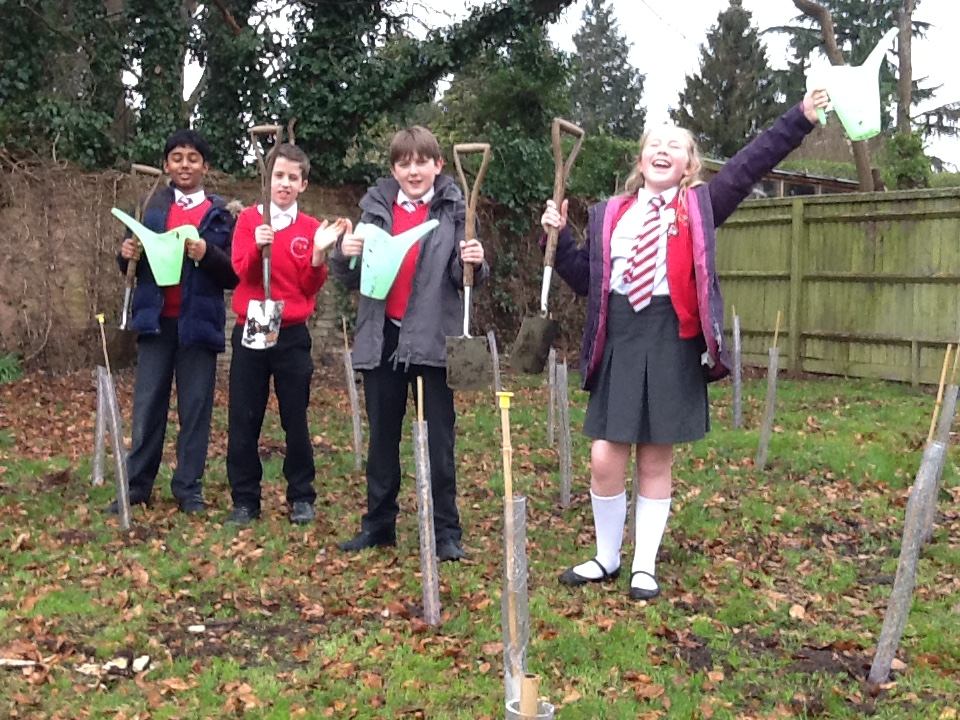 Year 6 planting trees